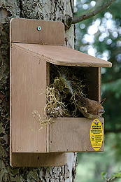 Accessories - Nest Boxes - Open Fronted Nesting Box
