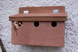 Accessories - Nest Boxes - Sparrow Terrace